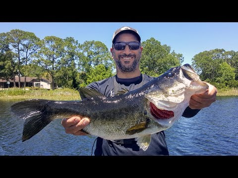 GIANT BASS & BIG NUMBERS In Orlando!!! (Florida Bass Fishing)