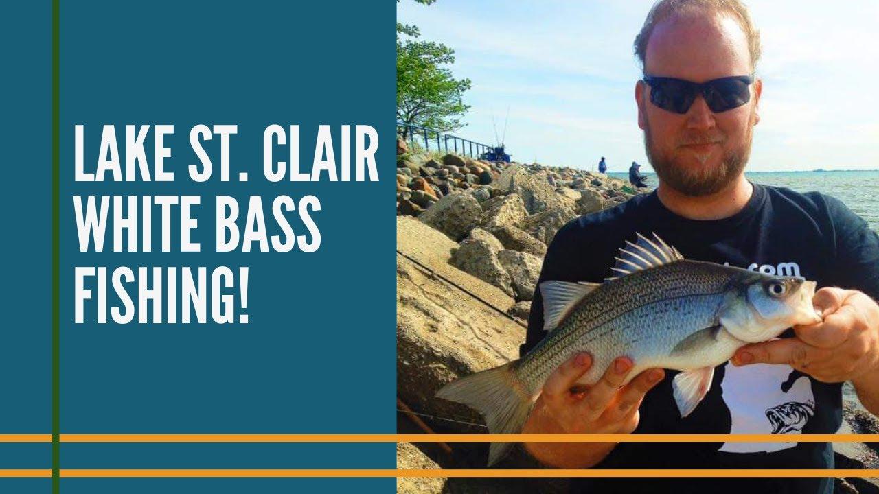 White bass fishing lake st clair detroit michigan youtube for Lake st clair ice fishing