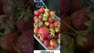 Ольга Гажиенко Инстаграм Сторис 14 июня 2019