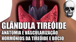 vdeo aula 153   sistema endcrino   anatomia humana   glndula tireide anatomia e hormnios