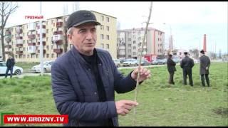 В Чечне продолжается массовый субботник