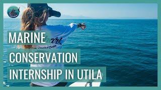 College Of Diving - Marine Conservation Internships In Utila
