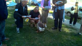 "Group sings ""Maria"" to Maria, the Echo Park Lake Goose"