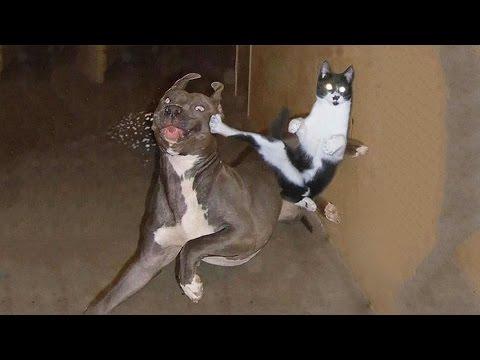 20 Ninja Cats That Master of Ninjutsu