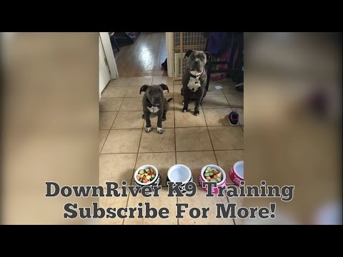 Feeding Your Dogs For Muscle Not Fat