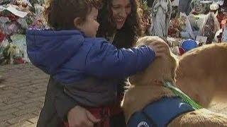 В Ньютауне собаки-терапевты залечивают раны