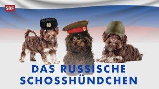 Schosshund oder spion? der neue trendhund bolonka zwetna aus russland erobert die schweiz.mehr zur sendung: http://www.srf.ch/deville https://www.facebook....