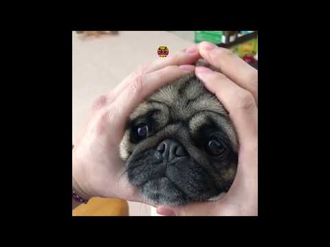 Try Not To Laugh Challenge Funny & Dog compilation