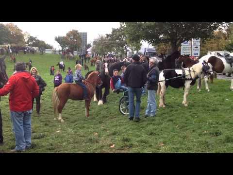 Ballinasloe Horse fair 2014