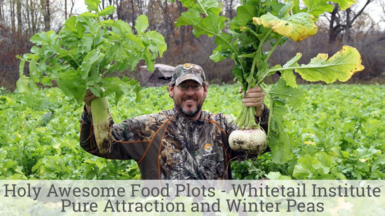 Holy Awesome Food Plots Whitetail Institute Pure