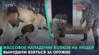 Верхотурье выходит на бой с волками