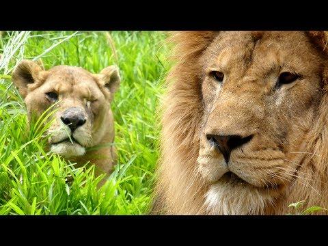 Lilongwe Wildlife Center - Malawi, Africa