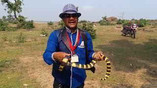 दोस्तों एक ऐसा ही साँप जो त्रिभुज  आकार का होता हैं (Banded kriat venomous)snake rescue team Panchet