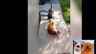 funny animal troll cat and dog (clip vui cho meo )