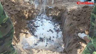 Cà Mau: Tiêu hủy trên 400 kg hải sâm dừa