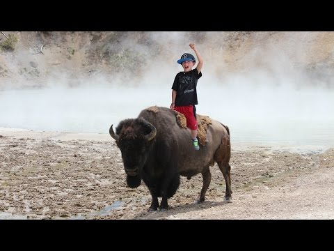 Yellowstone National Park | Old Faithful Geyser | Buffalo | Travel Diary