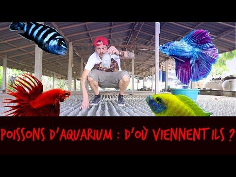 POISSONS D'AQUARIUM : D'OÙ VIENNENT ILS ? - VLOG THAILANDE - TOOPET