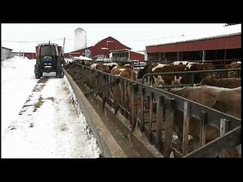 winter-care:-ensuring-cow-comfort-even-in-the-coldest-months