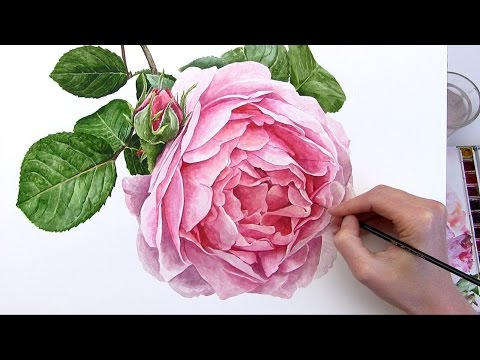 How To Paint Realistic Rose Flower In Watercolour