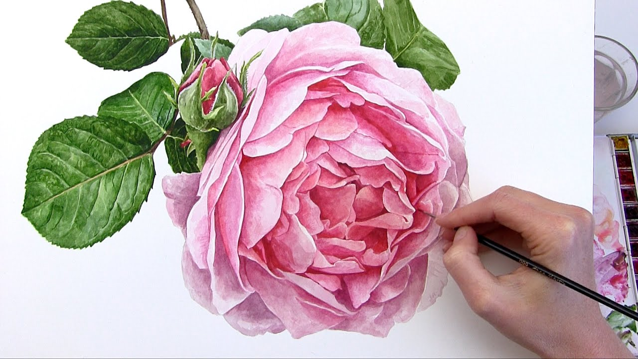 How to paint a realistic rose flower in watercolour youtube how to paint a realistic rose flower in watercolour mightylinksfo