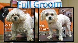 In this video I show to to groom a Zuchon. Which is a Bichon and sh...