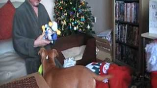 Staffordshire Bull Terrier:brody's First Christmas 2008...part 1