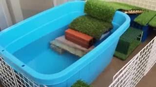 ベランダで飼育している亀の動画です。