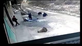 Dzik zabija mężczyznę i rani kobietę (Chiny)