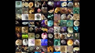 Consecutive category morphing of GANs generated images (10x10 version, submitted to ICLR 2018) thumbnail