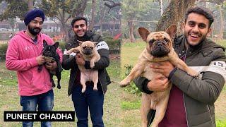India's best French BullDogs   PulkitVamp