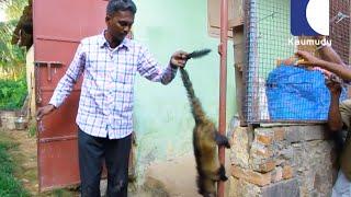 Vava Suresh Caught a Cute Cobra Baby & an Asian Civet | SNAKE MASTER 169 15 07 2016 | Kaumudy TV