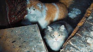 Спасение кошек погорельцев на Олимпийской