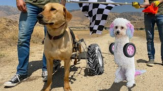 1st EVER Homeless Dog Wheelchair Race! You'll never guess who wins!