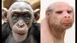 Если обезьяну спарить с человеком получим ЭТИХ УРОДОВ