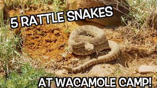 rattle-snake-wranglin-rodeo-time-131
