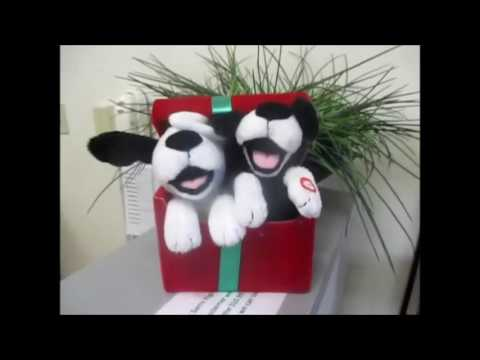 SUSAN STONE ( BARKING SINGING DOGS CHRISTMAS SONGS ) - YouTube