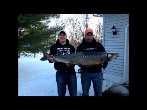 Fish Hard Get Lucky - Father and Son Spear Huge Sturgeon