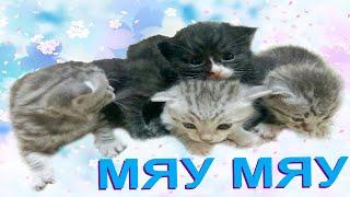 Кошка родила котят/ Дети играют с котятами/ Детское видео/ Tim Junior