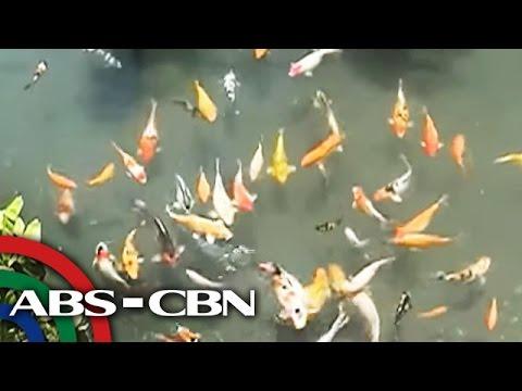 UKG: Estero sa Iligan, ginawang fish pond