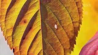 第15回「〝秋〟色いろ」