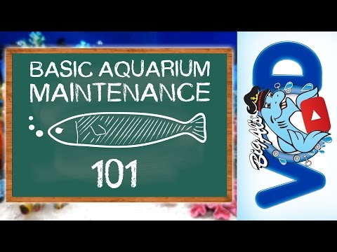 Basic Aquarium Maintenance 101 | BigAlsPets.com