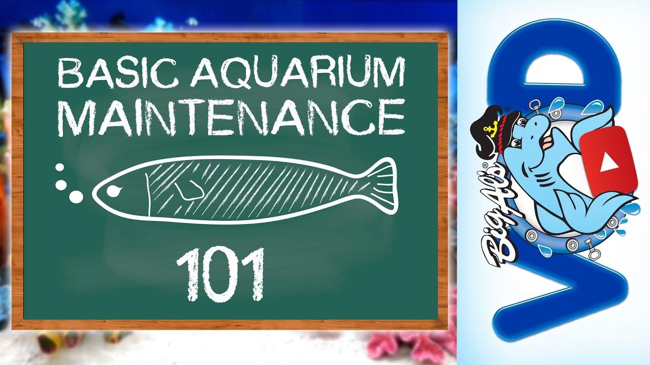 Basic Aquarium Maintenance 101