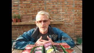 видео Выращивание гибридных роз (50 фото): в открытом грунте, из черенков, из семян, сорта, когда сажать, уход