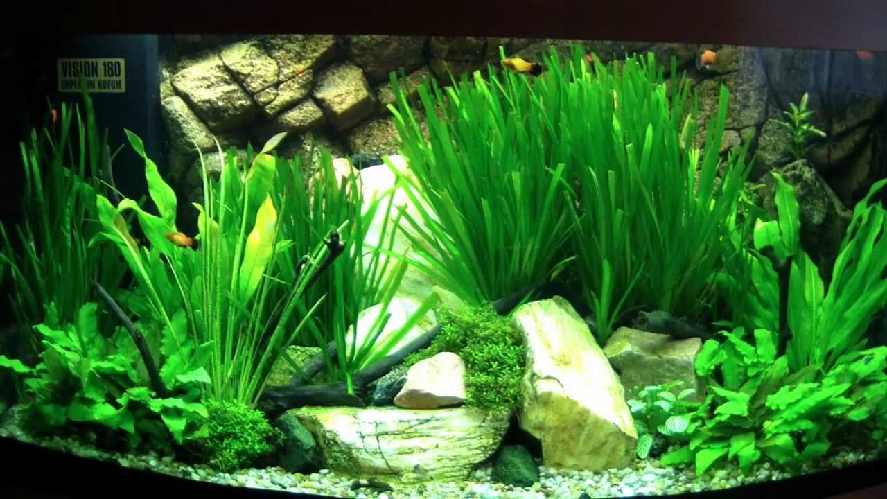 juwel vision 180 planted aquarium 2012 youtube. Black Bedroom Furniture Sets. Home Design Ideas