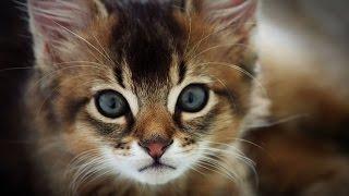 top 10 most friendliest cat breeds in the world top ten stuffs