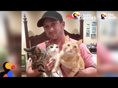 Couple Devotes Lives To Rescuing Special Needs Cats   Dodo Heroes