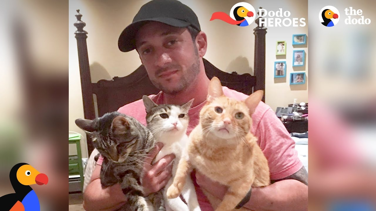 Couple Devotes Lives To Rescuing Special Needs Cats | Dodo Heroes