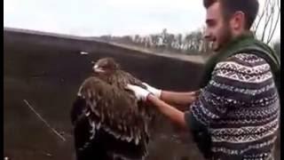В Тбилисском зоопарке вылечили и выпустили на волю орла-могильника