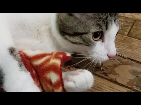 Kitten Close Up 2017-05-29