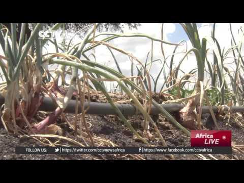 26928 Bibliothek agriculture 002 002 CCTV Afrique Kenyans harness solar power to irrigate crops